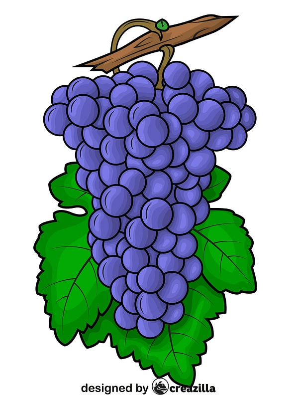 Black Grapes on Branch vector