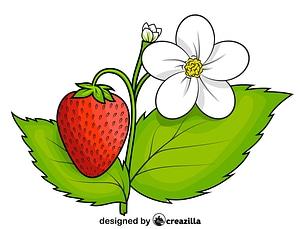 Strawberry Plant vector