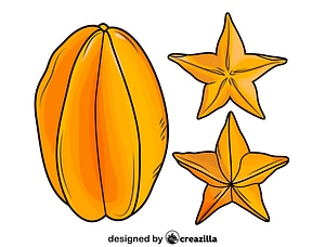 Star Fruit vector
